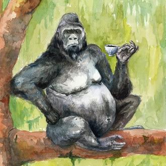 Kaffeabe II – gorilla