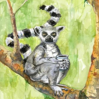Kaffeabe III – lemur