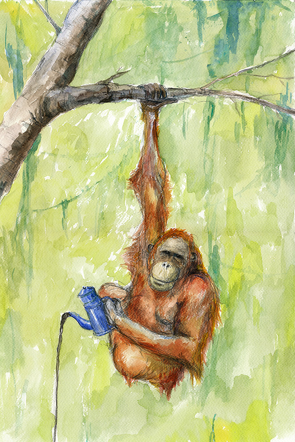 Kaffeabe orangutang